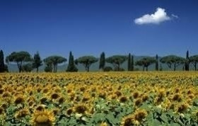 Maremma Toscana - Wine and Tours by Enocuriosi