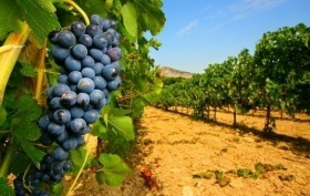 NOTE sulla Regione Vitivinicola Toscana -  Enocuriosi di Wine and Tours