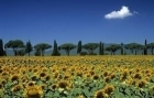 ORCIA VALLEY & MONTEPULCIANO by minivan  - full day tour - -  Enocuriosi by Wine and Tours