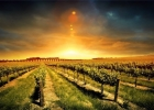 Chianti at Sunset Dinner - by Minivan -  Enocuriosi by Wine and Tours