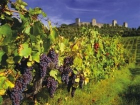 Taste of Chianti - Full day tour -  Enocuriosi by Wine and Tours